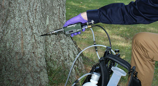 man injecting a pesticide into the bark of an ash tree